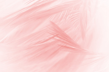 Beautiful light pink vintage color trends feather pattern texture background