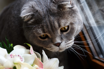 Cat on the windowsill playing with a bouquet of flowers.