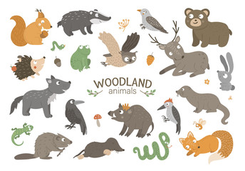 Set of vector hand drawn flat woodland animals. Funny animalistic collection. Cute forest illustration for children's design, print, stationery.