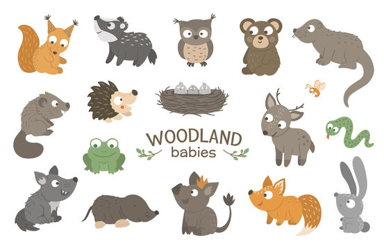 Set of vector hand drawn flat woodland baby animals. Funny animalistic collection. Cute forest illustration for children's design, print, stationery