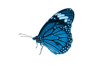 Blue butterfly isoalted on white background