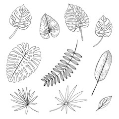 set of hand drawn tropical leaves,