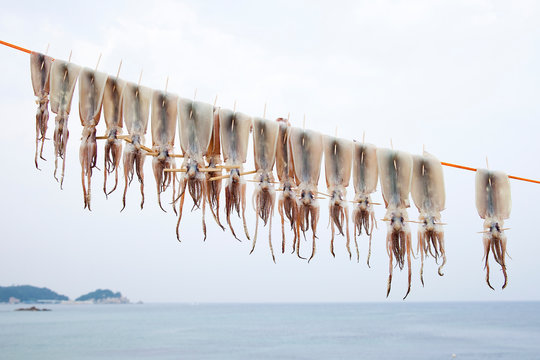 Squid. Gonghyeonjin beach in Goseong-gun, South Korea.