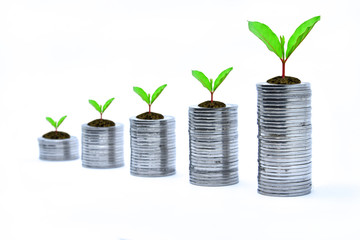 Coins are arranged in rows and stacked in a pile. There are young shoots of growing trees. This picture shows the growing finances, with white background