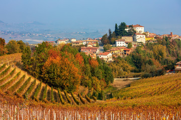 Colorful autumnal vineyards on the hills of Langhe, Italy.