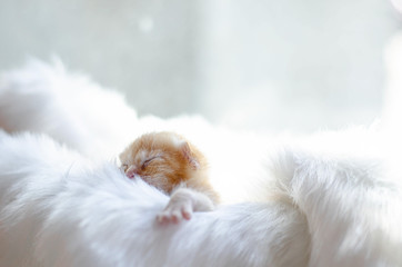 Cute orange kitten sleeping on a white cloth.Do not focus on the main object of this image.