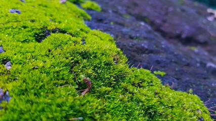 Printed kitchen splashbacks Bonsai moss on rock