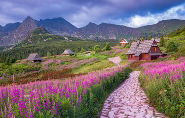 mountain landscape, Tatra mountains panorama, Poland colorful flowers and cottages in Gasienicowa...