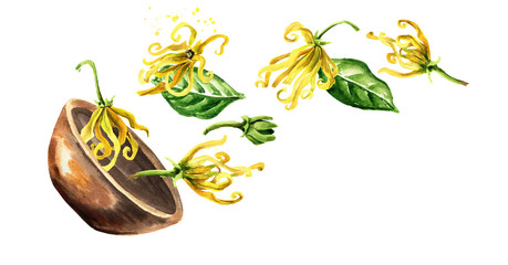 Bowl with Ylang-Ylang yellow flower. Cananga odroata. Watercolor hand drawn illustration isolated on white background