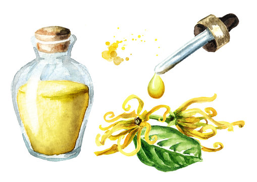 Ylang-Ylang  yellow flower or  Cananga odroata and essential oil drop and glass bottle. Watercolor hand drawn illustration isolated on white background