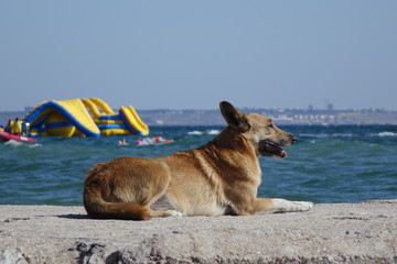 dog resting on the seashore