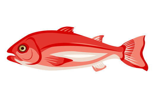 Raw northern red snapper icon isolated on white background, healthy food, fresh whole fish, vector illustration.