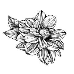 Сloseup Dahlia flower with leaves. Black and white outline illustration hand drawn work isolated on white background.
