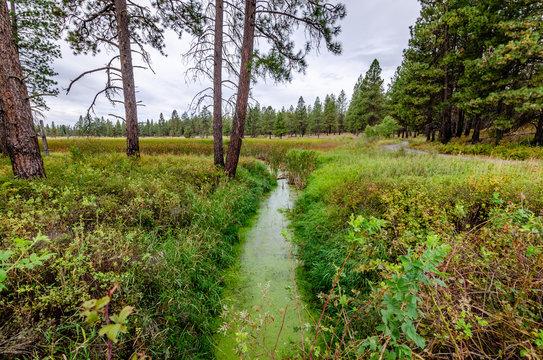 Creek To A Beaver Pond