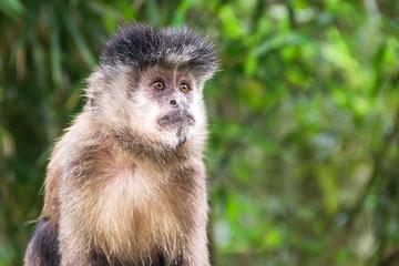 Macaco olhando sério e fixamente para o horizonte
