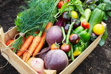 Box with ripe organic fresh vegetable harvest