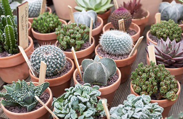Variety of cactus and succulent in cute terracotta pots table