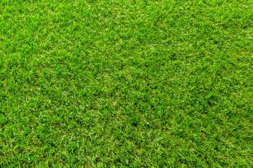 Papiers peints Herbe background, grass