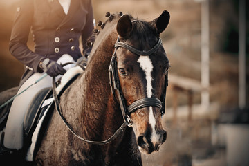Portrait of a sports brown horse with a white groove on the muzzle in the bridle Wall mural