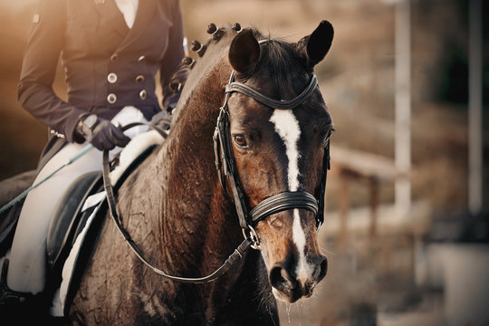 Portrait of a sports brown horse with a white groove on the muzzle in the bridle