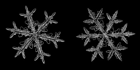 Two snowflakes isolated on black background. Illustration based on macro photos of real snow crystals: elegant stellar dendrites with fine hexagonal symmetry, complex inner details and ornate shapes.
