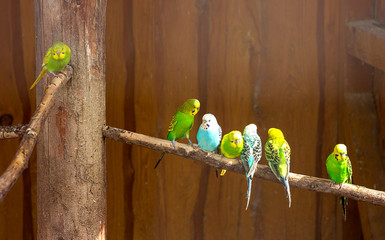 budgies are sitting on a branch in a zoo