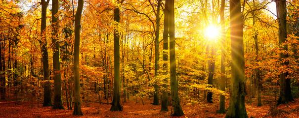 Aluminium Prints Autumn Gold forest panorama in autumn