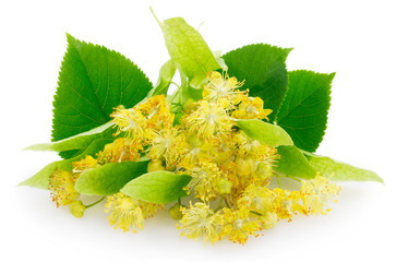 Flower of linden on white background