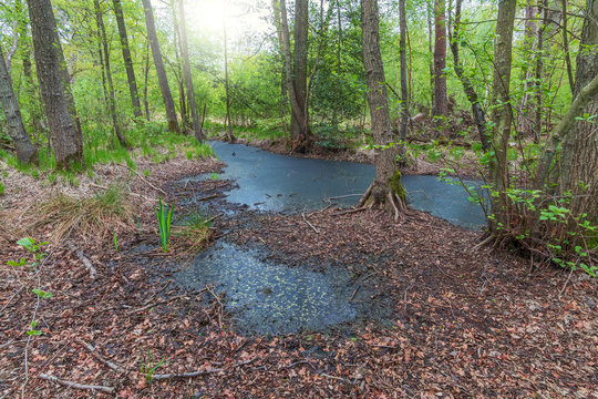 Das Naturschutzgebiet Ribnitzer Großes Moor
