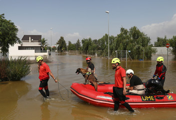 Members of Military Emergencies Unit use a dog to search for a missing Dutch citizen, after torrential rains in Dolores near Alicante