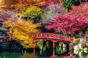 Fototapete - Autumn season in Japan, Beautiful autumn park.