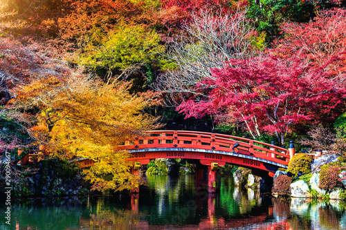Wall mural Autumn season in Japan, Beautiful autumn park.