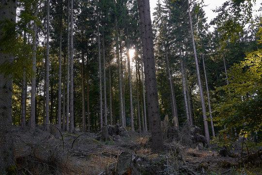 Arnsberger Wald, Deutschland im Sonnenlicht