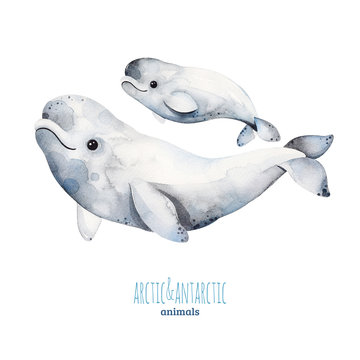 Watercolor set with cute mother and baby beluga whales .Cartoon arctic and antarctic animals.Perfect for your project,print,scrapbook,baby shower,Birthday card,invitations,greeting card and much more.