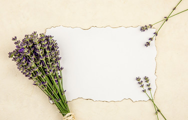 Top view of white empty sheet of paper with burned edges and surrounded by fresh lavender branches...