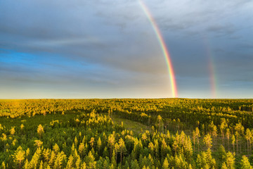 Drone photo, rainbow over summer pine tree forest, very clear skies and clean rainbow colors. Scandinavian nature are illuminated by evening sun.
