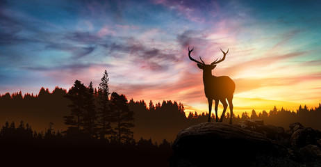 Photo sur Plexiglas Chasse deer at sunset