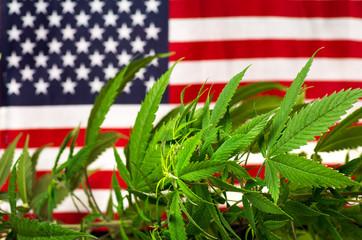 Cannabis plant and USA flag
