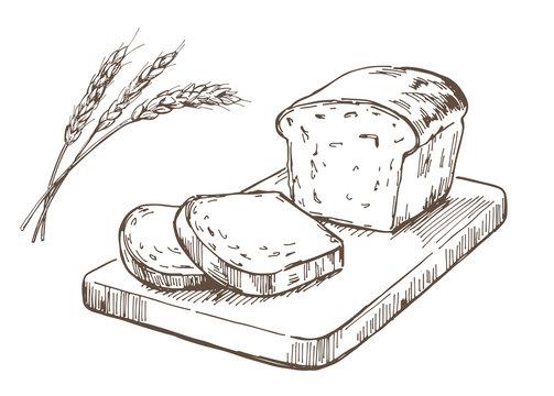 Hand-drawn illustration material: bread, pound cake, bread
