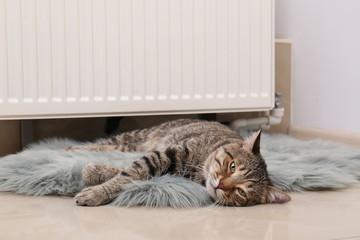 Cute tabby cat on faux fur rug near heating radiator indoors
