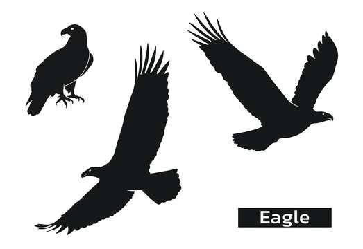 eagle silhouette set. zoo symbol of strength, highness, element of air. eagle symbol of usa. isolated vector images.