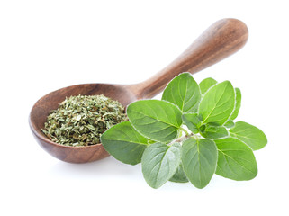 Oregano fresh leaves with dry oregano in wooden spoon