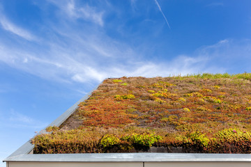 Ecological green roof in the Netherlands Wall mural