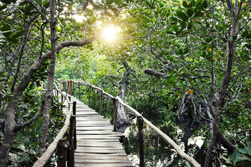 Wooden boardwalk through the Mangroves of Mida Creek, Kenya Wall mural