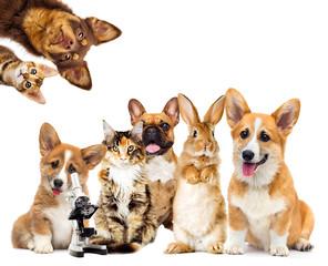 Fototapete - set of animals on a white background