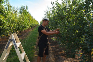 Young farmer in white hat black t-shirt and sunglasses cheks the condition of leaves on trees after treatment with fertilizers