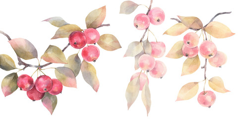 Hand painted watercolor illustration. A set of wild apples on branches.