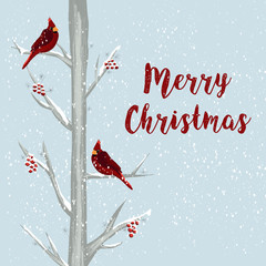 Merry Christmas card with red cardinal bird in winter forest. Hand drawn illustration Christmas holiday template. Birds sitting on snowy trees with Holly berries. For greeting card, web post
