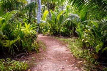 Photo sur Plexiglas Route dans la forêt Ground rural road in the middle of tropical jungle.