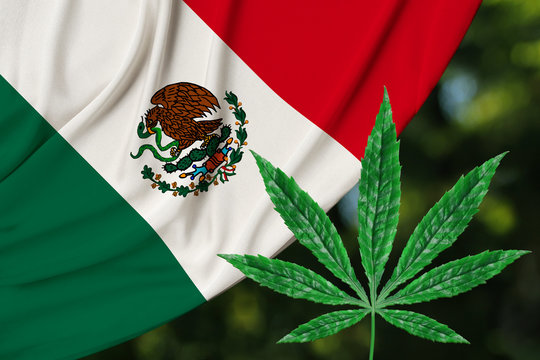 green leaf of hemp and beautiful mexico silk national flag, concept of medical cannabis, legalization of drugs, drug trafficking crimes, close-up